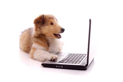 lachender Welpe am Laptop